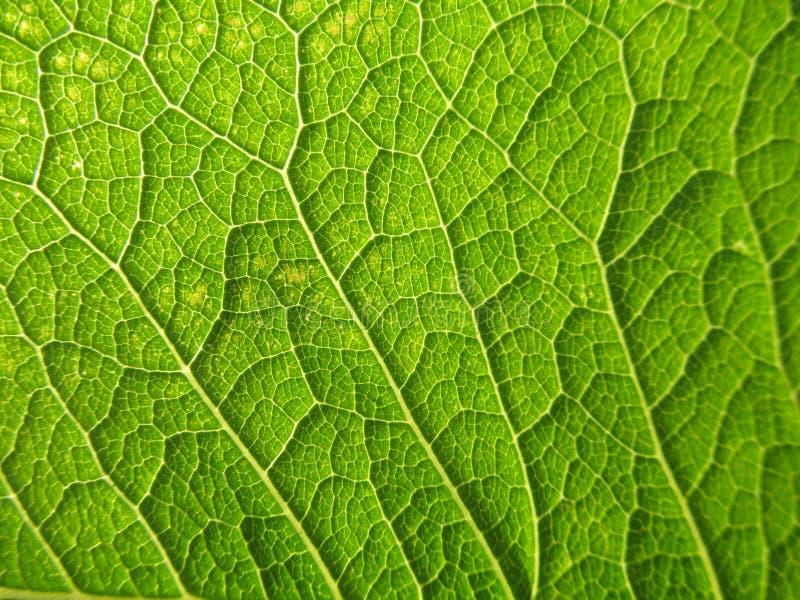 Texturas naturales fotografía de archivo libre de regalías