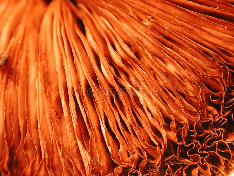 Texturas originais dos folhos da natureza