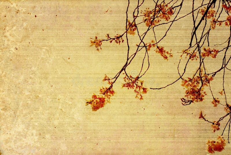 Texturas velhas da flor de papel fotos de stock royalty free