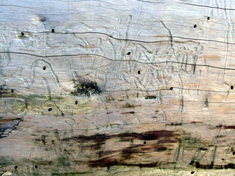 Texture 1 de bois de flottage images stock