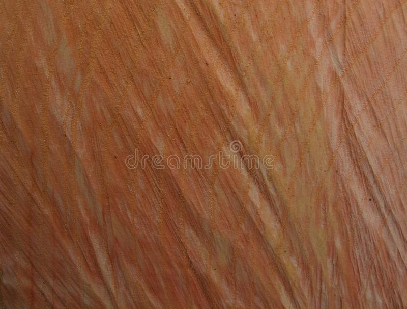 Texture abstraite de fond de bois photos libres de droits
