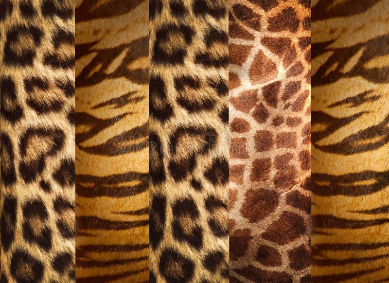 Texture of animal skins stock photo