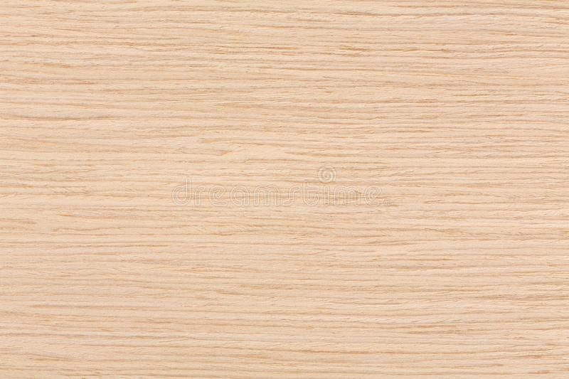 Texture of aok wood pattern background. Extremely high resolution photo royalty free stock photos