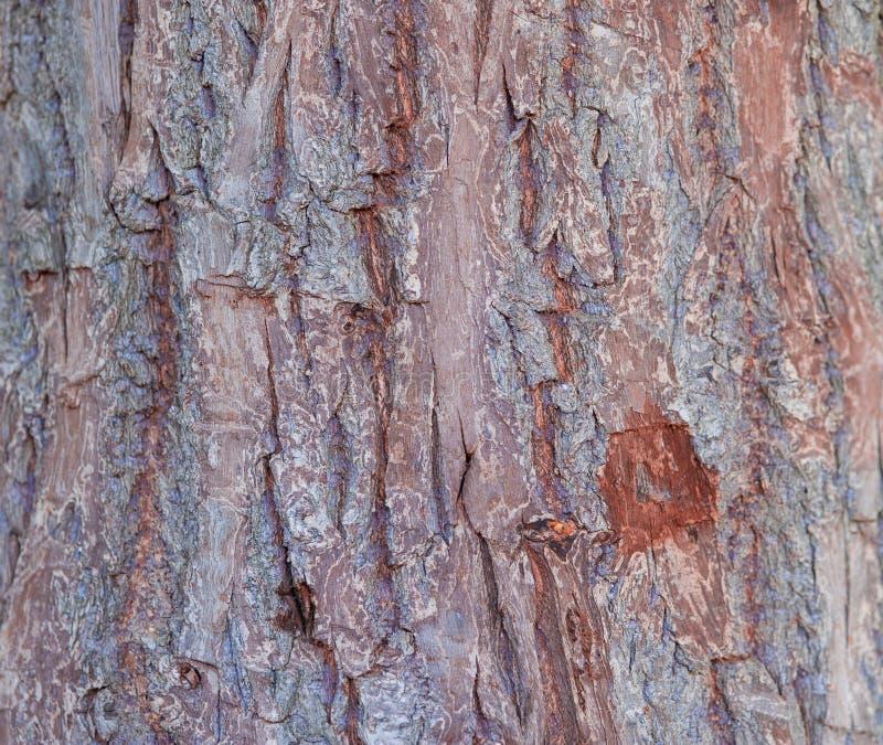 Texture approximative d'?corce photos stock