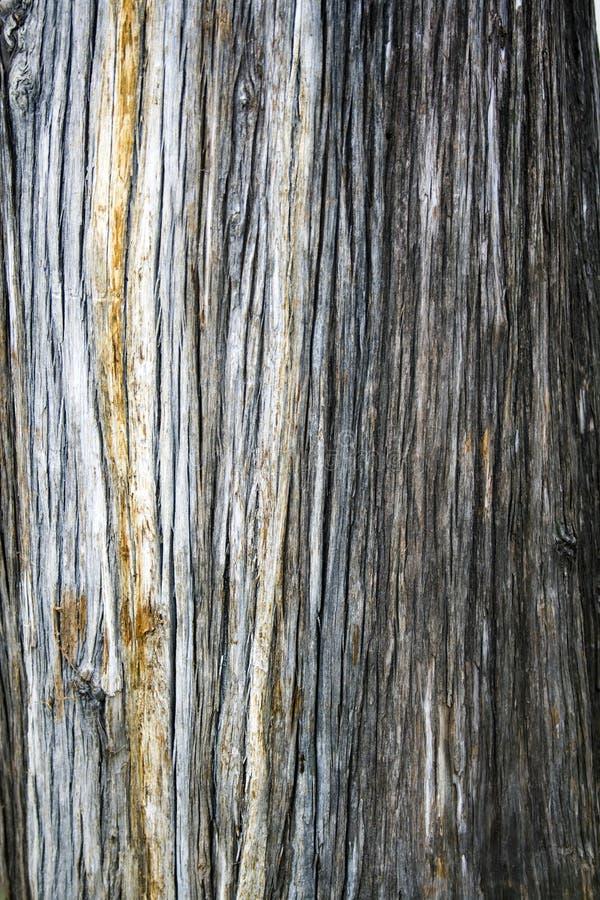Texture arrière de configuration d'arbre photos stock