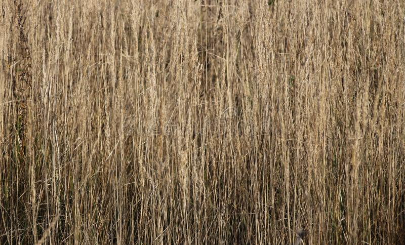 Texture of autumn, dry grass stock photo