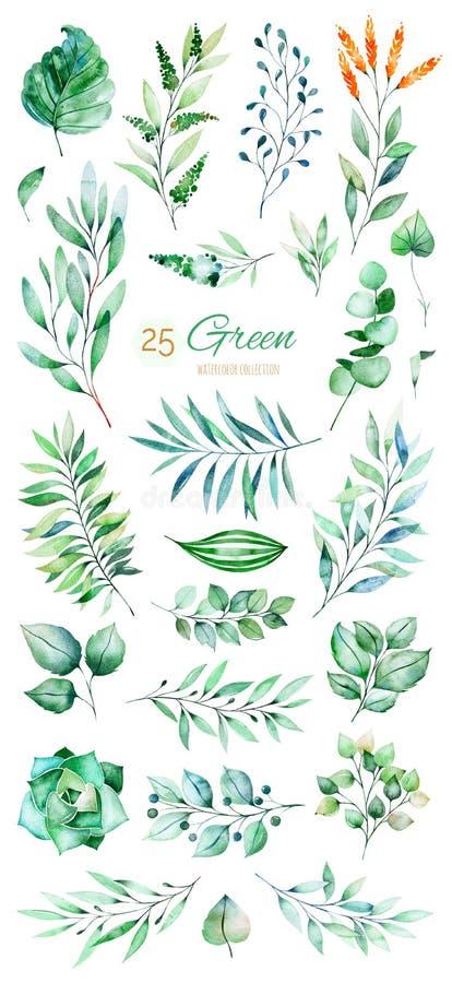 Texture avec vert, succulent, feuilles, feuilles tropicales, feuillage illustration de vecteur