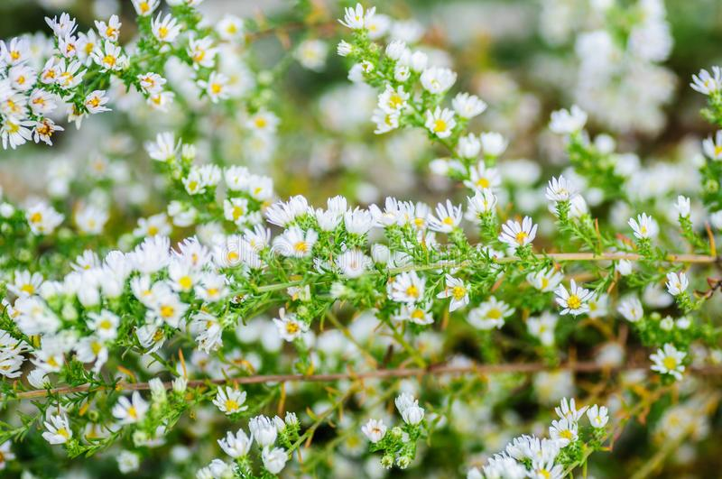 Texture background of green Leaves and white flowers.  royalty free stock photography