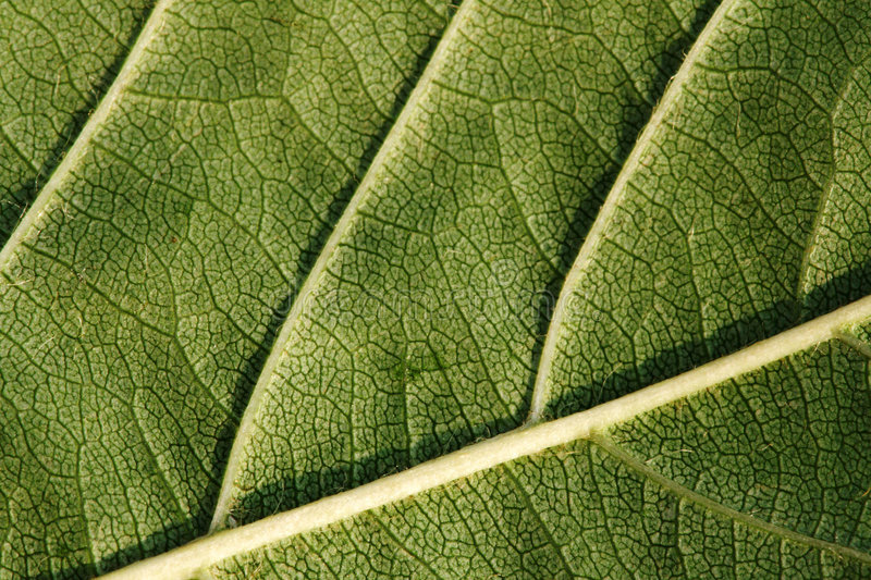 Download Texture, Background Of Leaf Stock Image - Image: 3385959