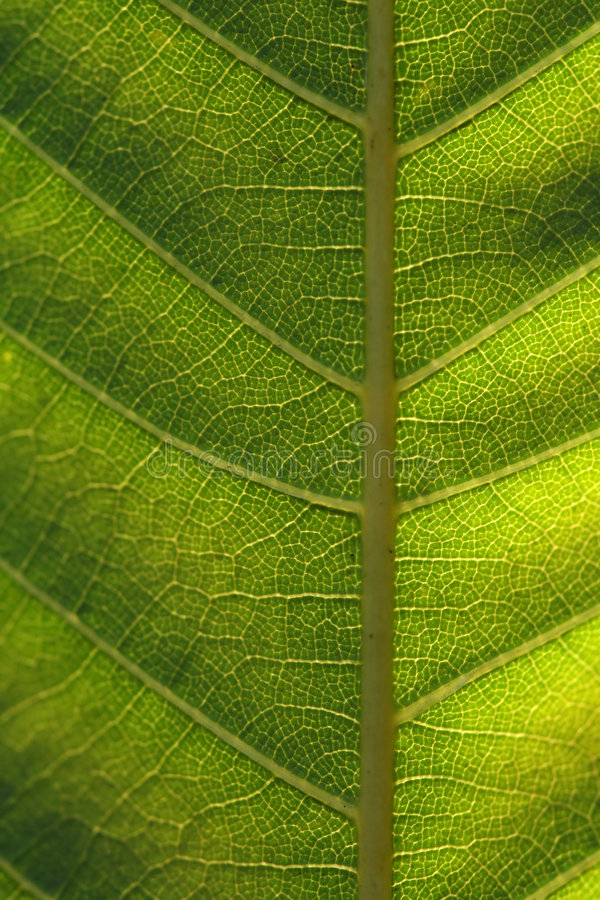 Download Texture, Background Of Leaf Stock Photo - Image: 3412418