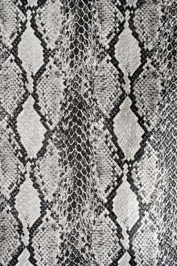 Texture background snake leather. Close up stock photo