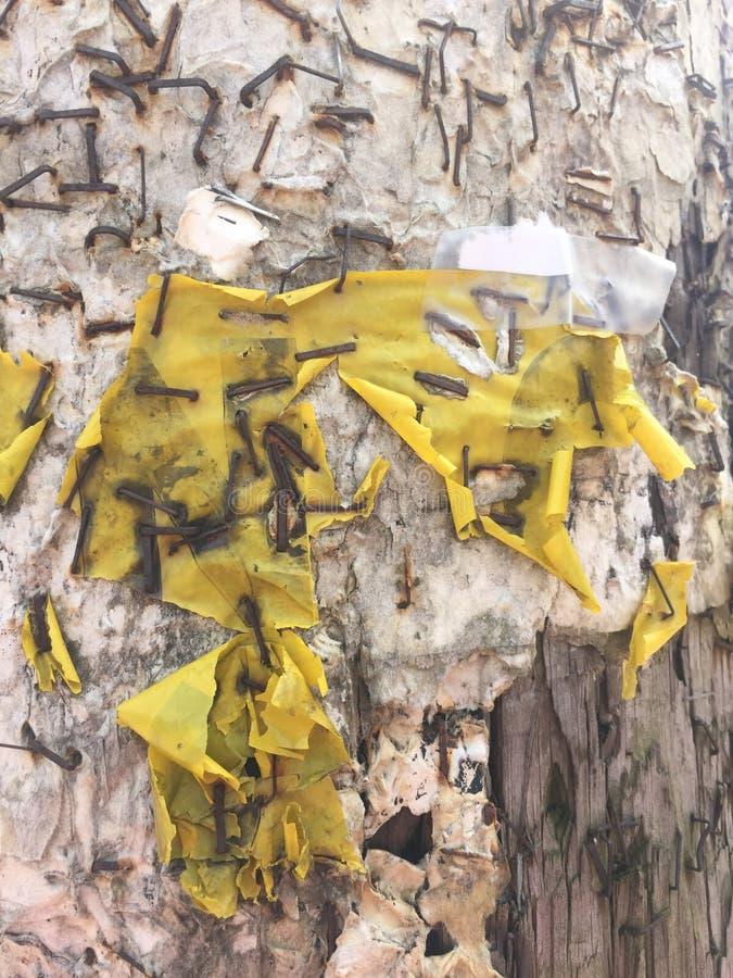 Texture background white peeled paint yellow plastic peeling grunge telephone pole rusty staples stock image
