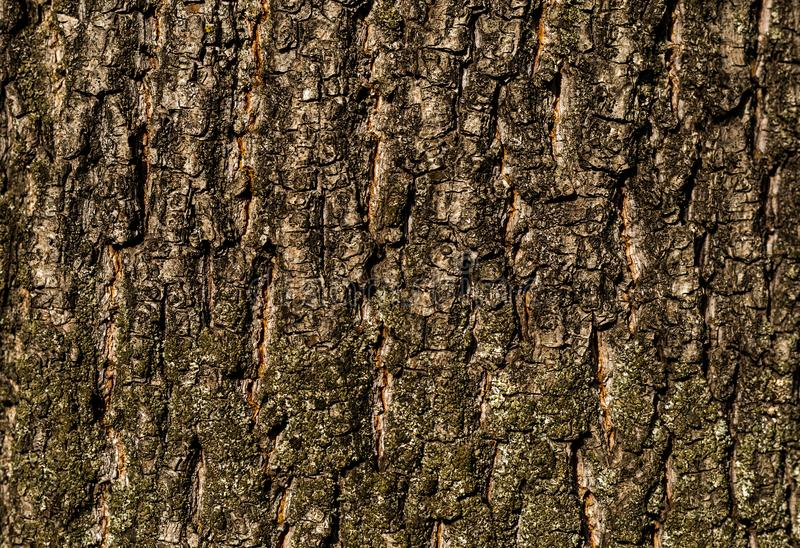 Download Texture Bark Oak Base With Natural Cracks Rustic Pattern For Web Design Stock Photo