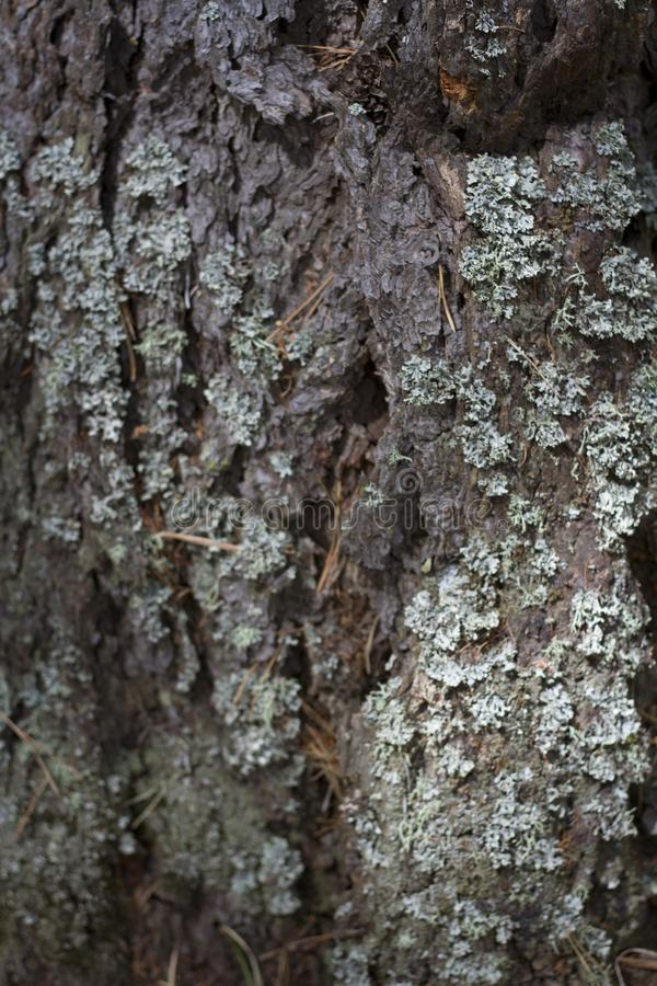 Tree bark close up sunlit stock images