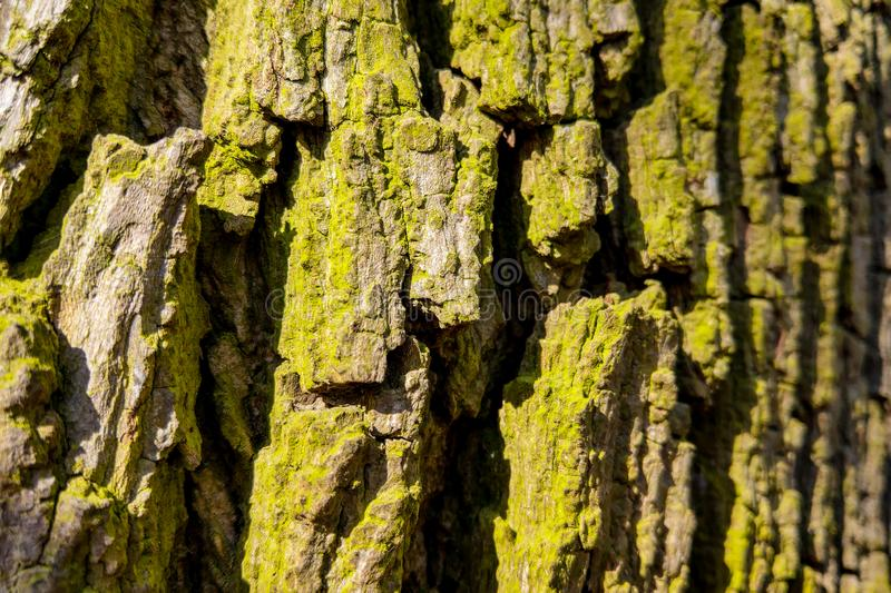 The texture of the bark of a tree trunk closeup background.  royalty free stock photos