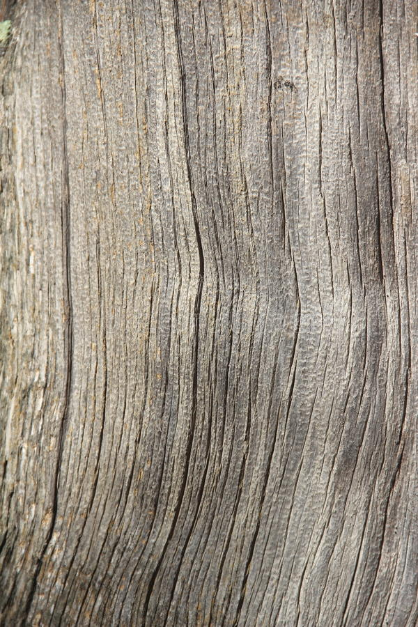 Texture of bark wood. royalty free stock photo