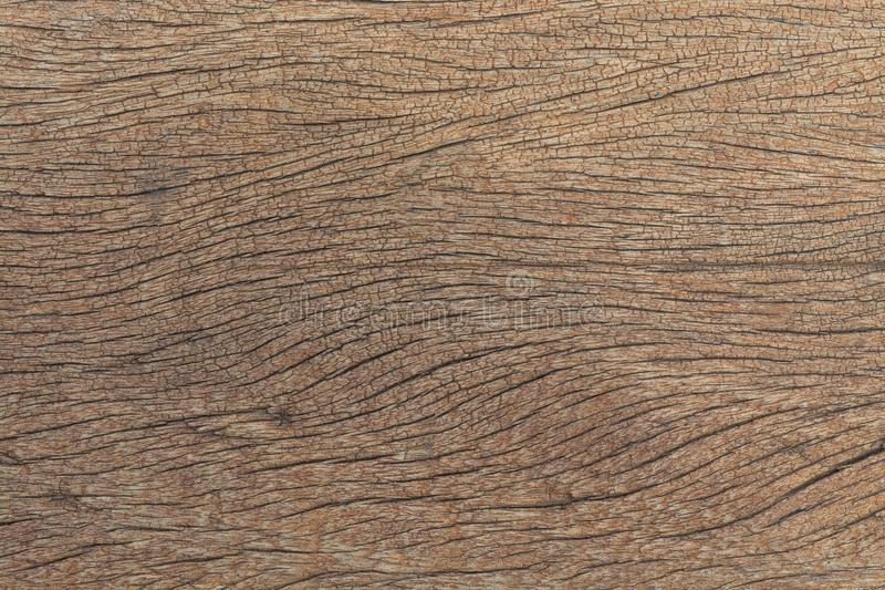 Texture of bark, wood grain background.  stock photography