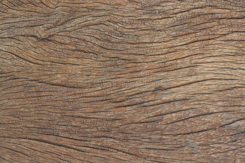 Texture of bark, wood grain background.  royalty free stock photography