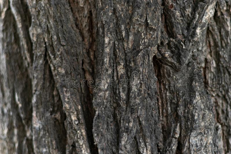 Texture of bark wood use as natural background stock images