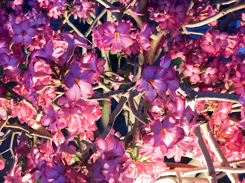 Texture of beautiful gentle natural purple red flowers of bushes plants with petals and twigs brightly glowing at night stock photo