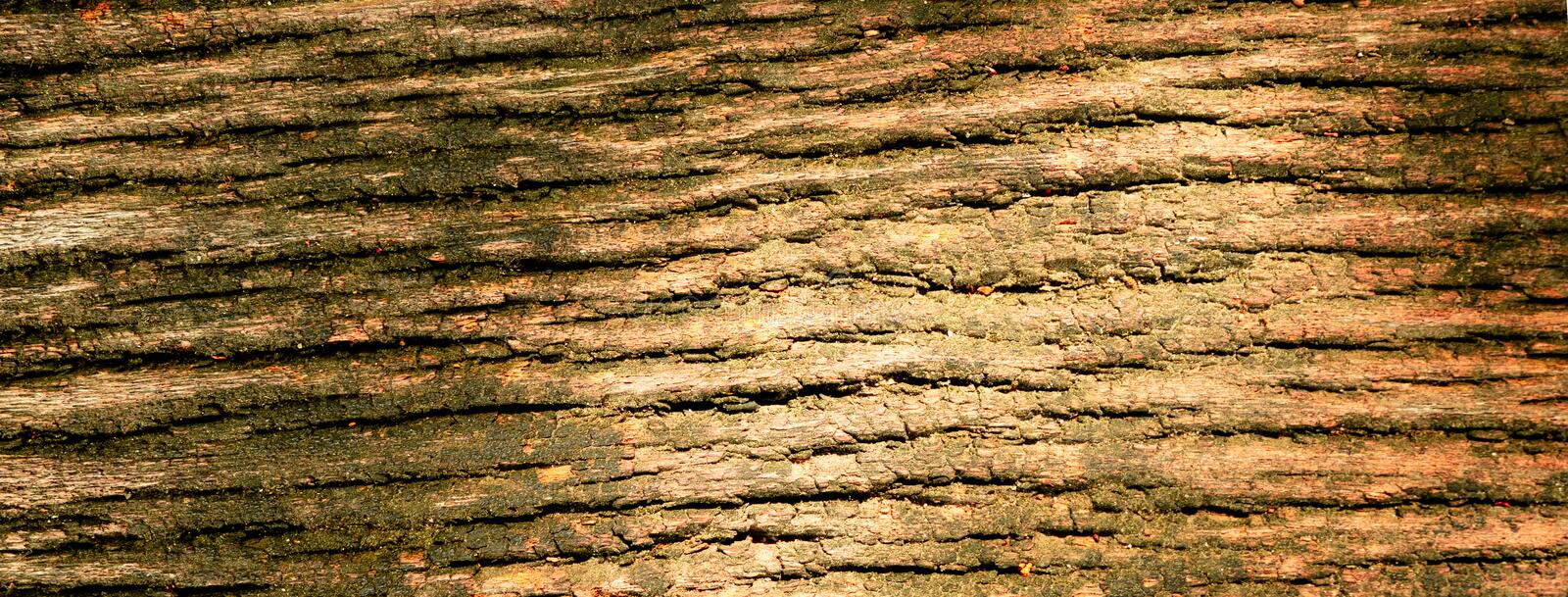 Texture of brown tree bark. stock photography