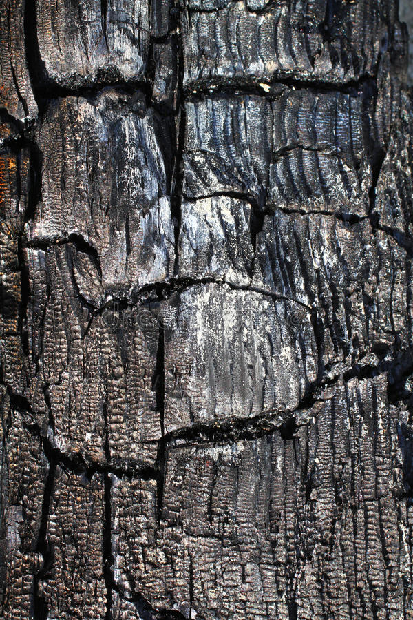 The texture of the burnt tree. Gray blue stock image
