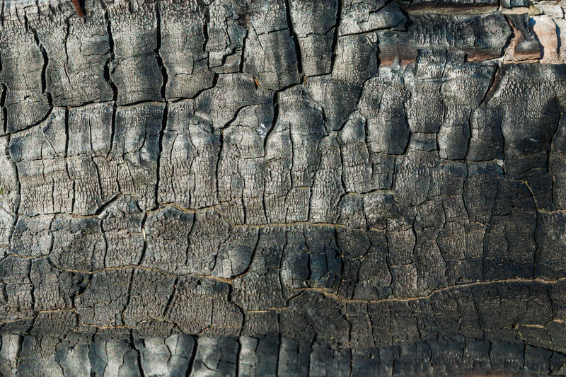 Texture of burnt wood. For design stock photo
