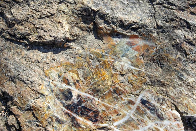 Texture of a chert sedimentary rock. As a background stock images