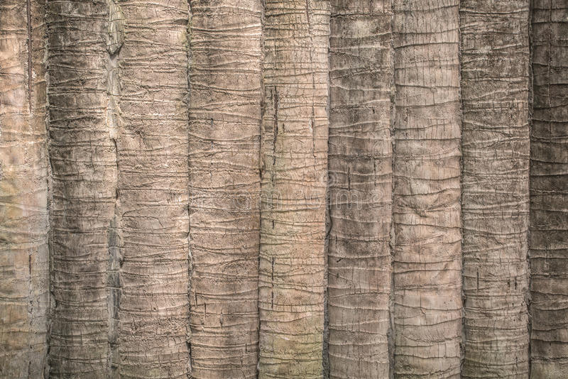 Texture of coconut or palm tree bark for background stock image