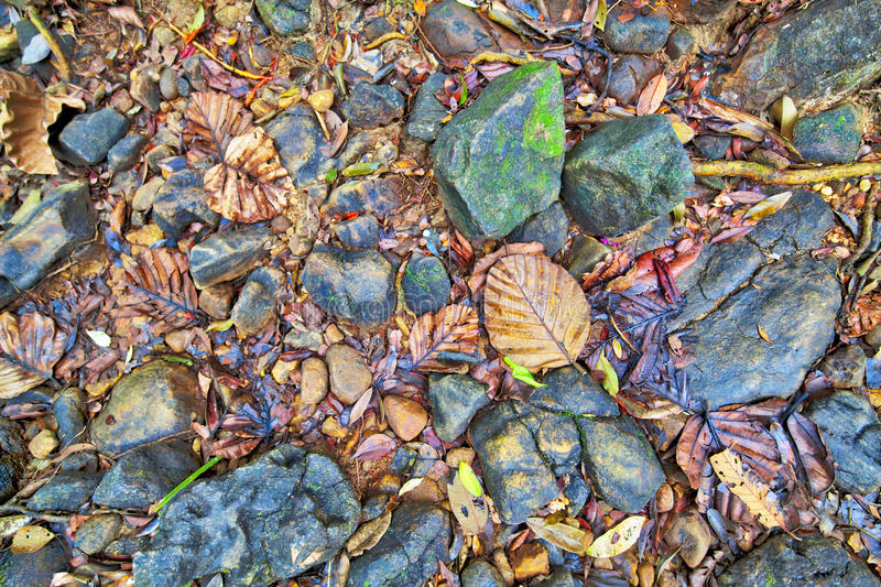 A texture of colorful leaves and stones in a dry creek bed royalty free stock photography