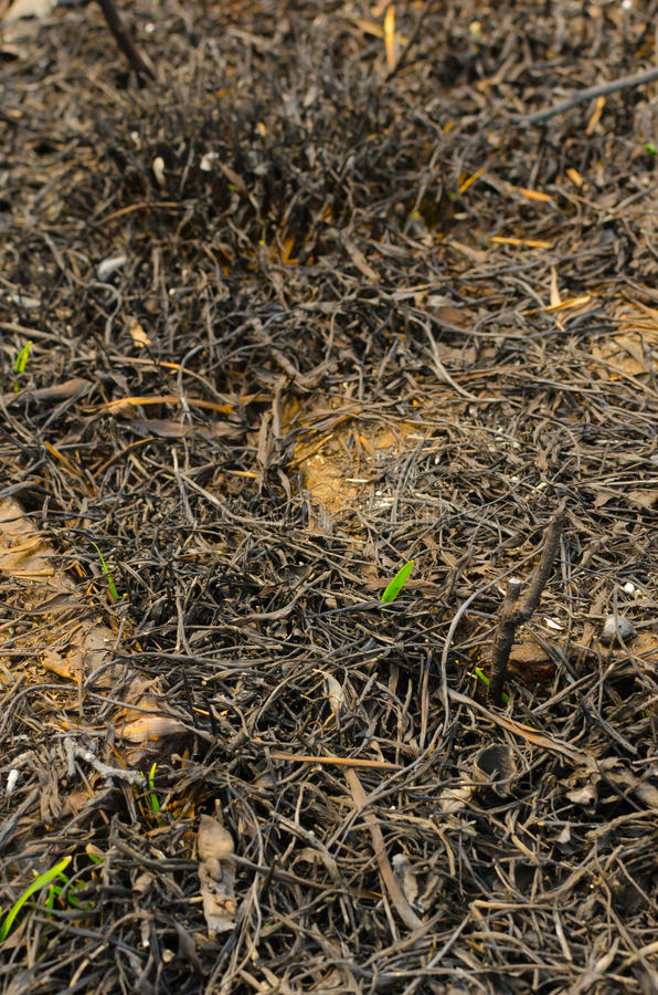 Download Texture After Combustion Hay And Green Shoots Stock Image - Image of burning, green: 39510663