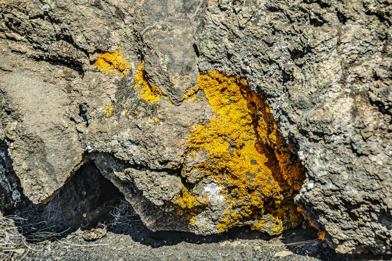 Texture crack in the rock on which grows moss and lichen. Typical lava material around volcano Teide. Close up selective focus. royalty free stock photography