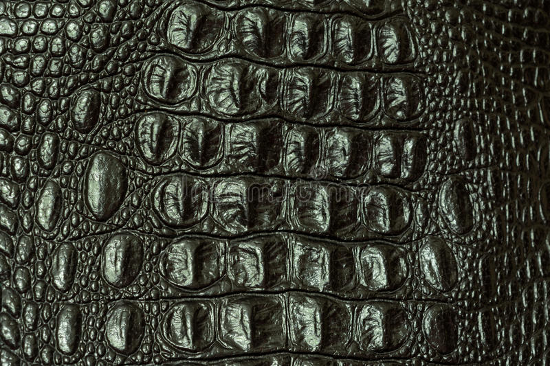 The texture of crocodile skin royalty free stock images