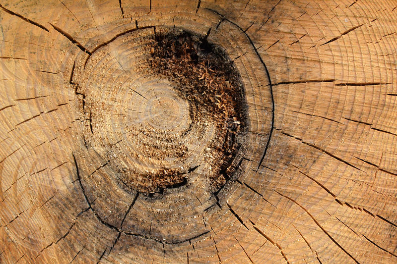 Texture 7865 - cut of wood logs. Detail texture of wood logs. Cross-section of the spar stock photo