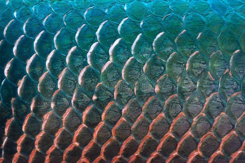 Texture d'échelle de poissons pour le fond, concept coloré images stock