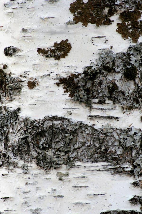 Download Texture d'écorce photo stock. Image du arbres, mousse, lichen - 726816