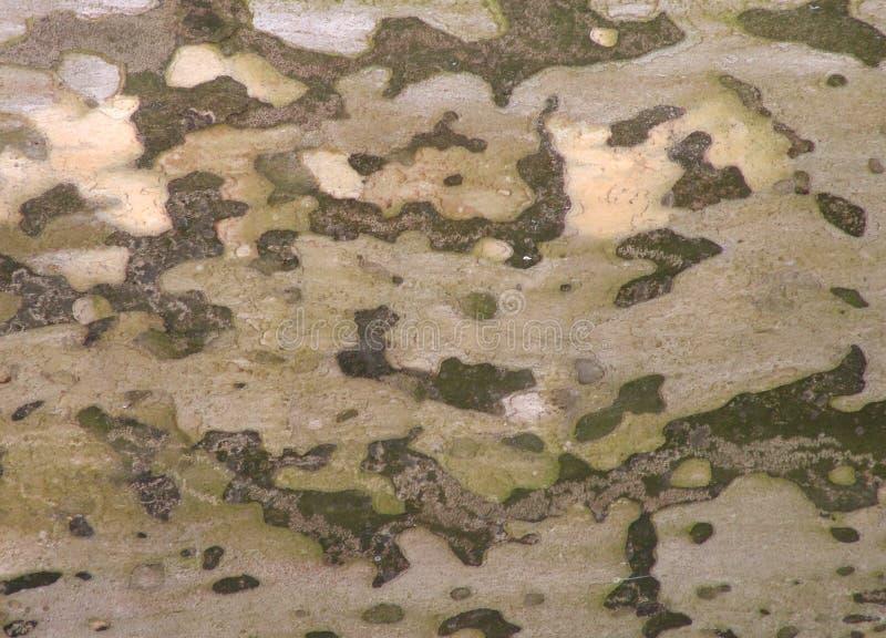 Download Texture d'écorce photo stock. Image du chêne, bois, enduit - 73542