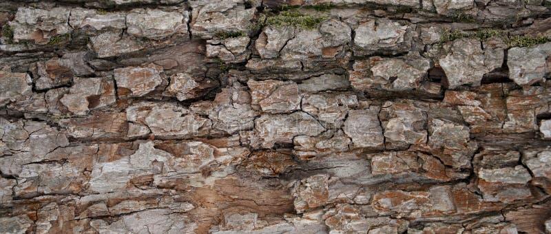 Texture d'écorce d'arbre de Brown images stock