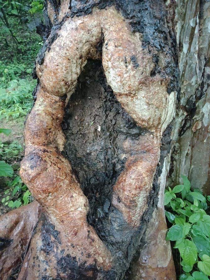 Texture d'écorce d'arbre, papier peint texturisé de fond photos stock