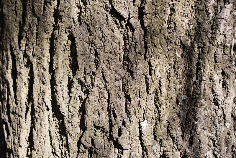 Texture d'écorce d'arbre rugueuse photos stock