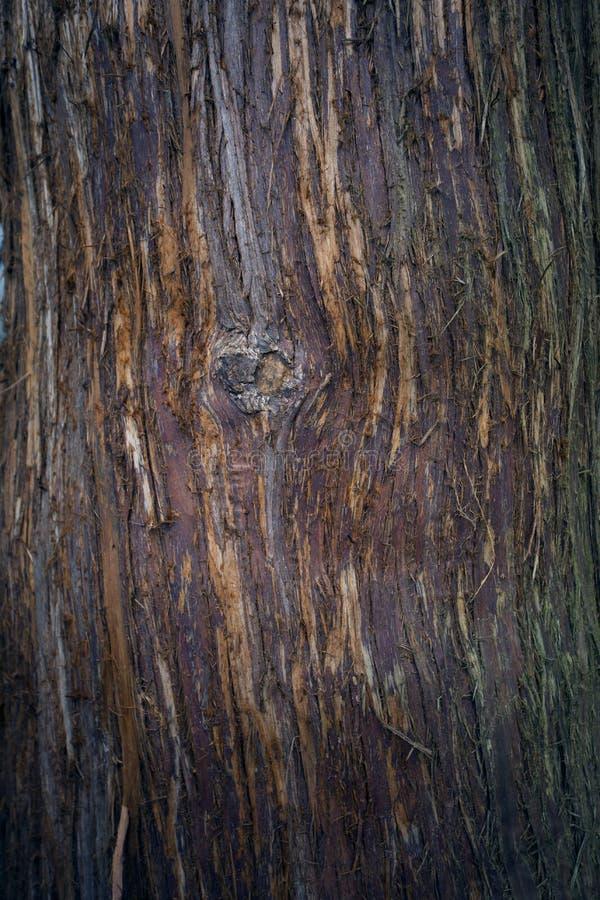 texture d 39 corce d 39 arbre tronc d 39 arbre vieux fond en bois d tail de tronc image stock image. Black Bedroom Furniture Sets. Home Design Ideas