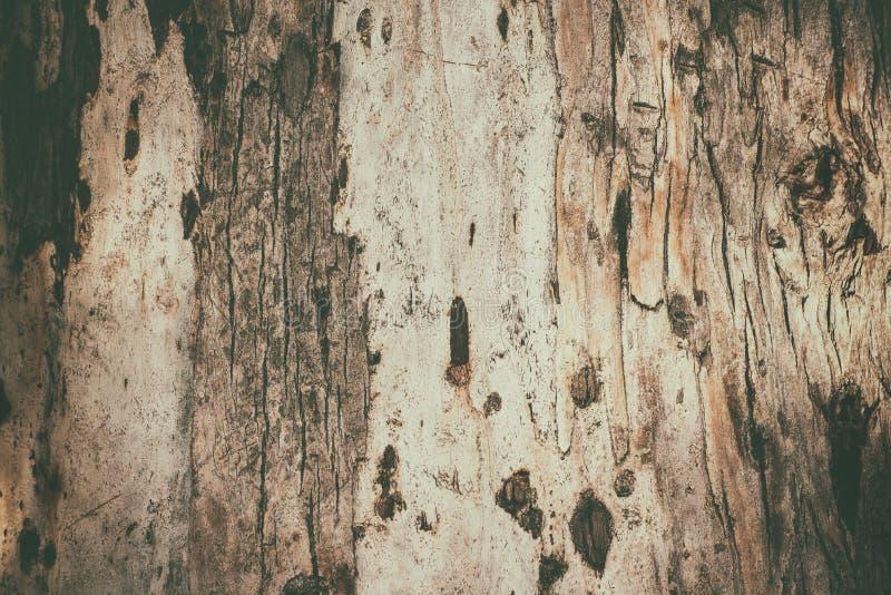 Texture d'écorce d'eucalyptus image stock