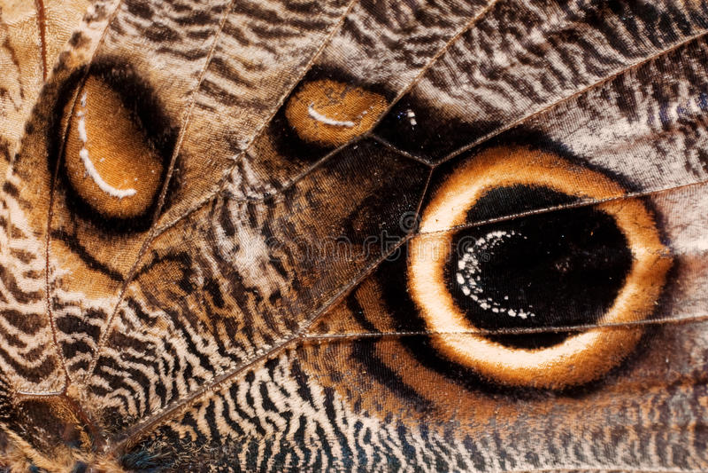 Texture d'aile de guindineau image libre de droits