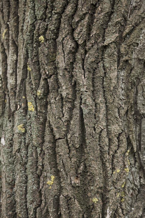 Texture d'arbre images libres de droits