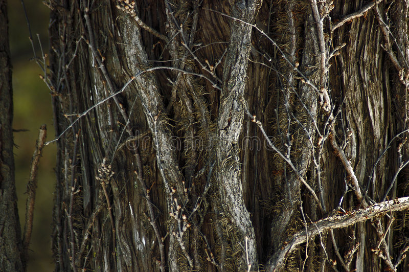 Texture d'arbre image stock