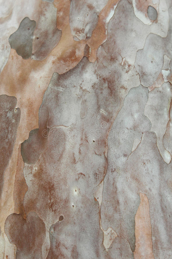Texture d'arbre de goyave photo stock