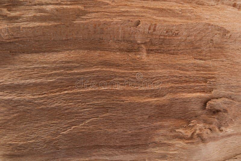 Texture d'arbre pour créer un fond naturel photo stock