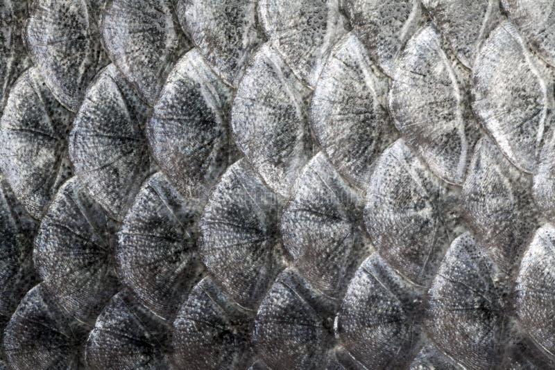 Texture d'?chelle de poissons photo libre de droits