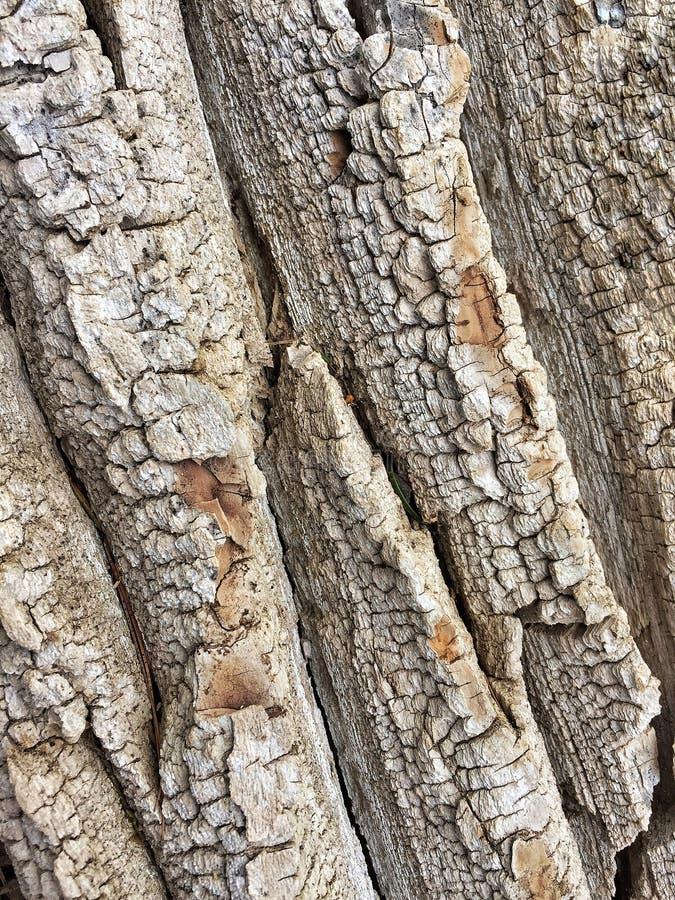 Texture d'?corce d'arbre image stock