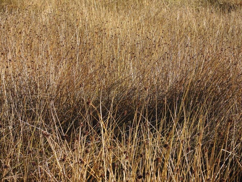 Download Texture D'or De Fond De Prairie Photo stock - Image du abondant, contexte: 77162736
